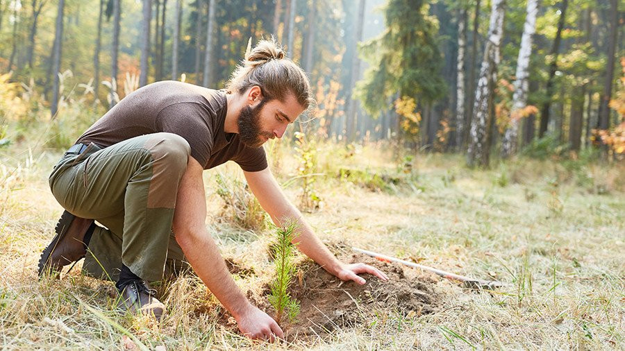 Native Tree planting Not Just Travel and Mossy Earth