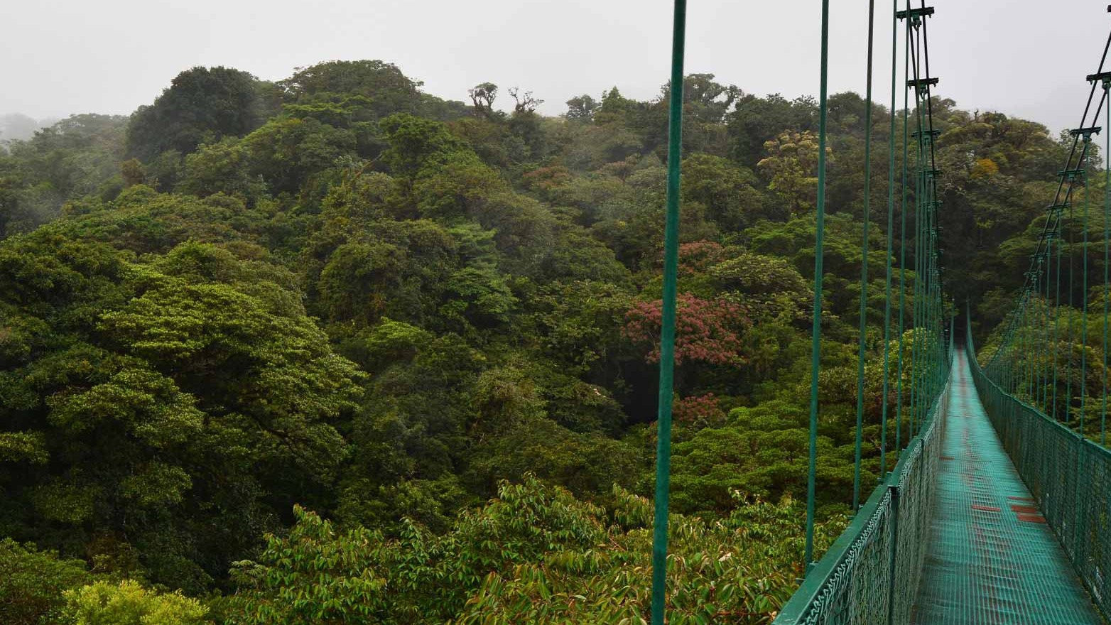 Cloud Forests in Costa Rica